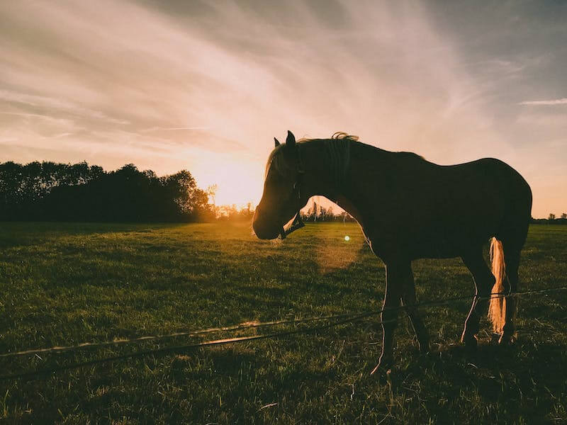 paardenbenodigdheden